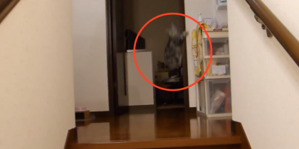She Comes Home, But Gets A Very Unexpected And Energetic Reaction… I Wasn't Expecting THIS!