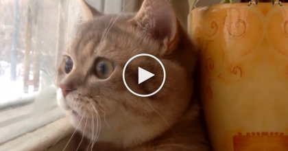 Their Kitty Looked Out And Noticed Something, But You CAN'T Miss What They Recorded Next…AWW!!