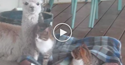 They Started Recording When They Noticed Their Cats Hanging Out With A New Friend. AMAZING