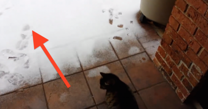 This Cat Sees 'White Stuff' On The Ground For The First Time, But His Reaction Is HILARIOUS!…