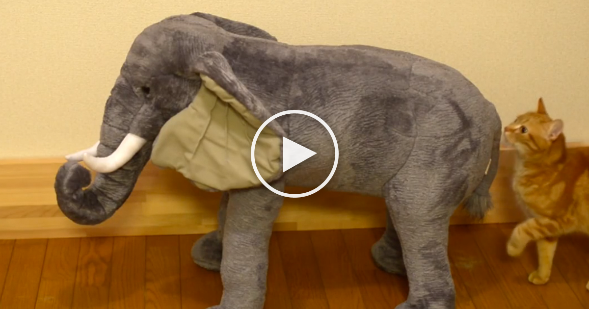 They Gave Their Cat A New Toy Elephant Watch What Happens