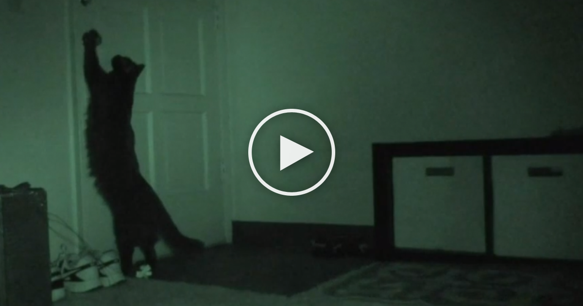 He Wanted To See What His Cats Were Doing At Night, So He ...