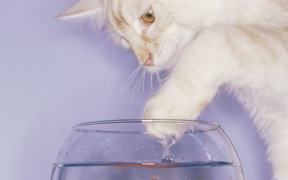 cats-loving-water-10
