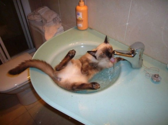 cats-loving-water-12