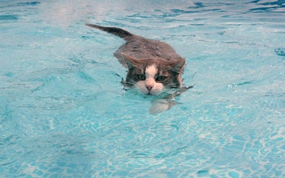 cats-loving-water-4