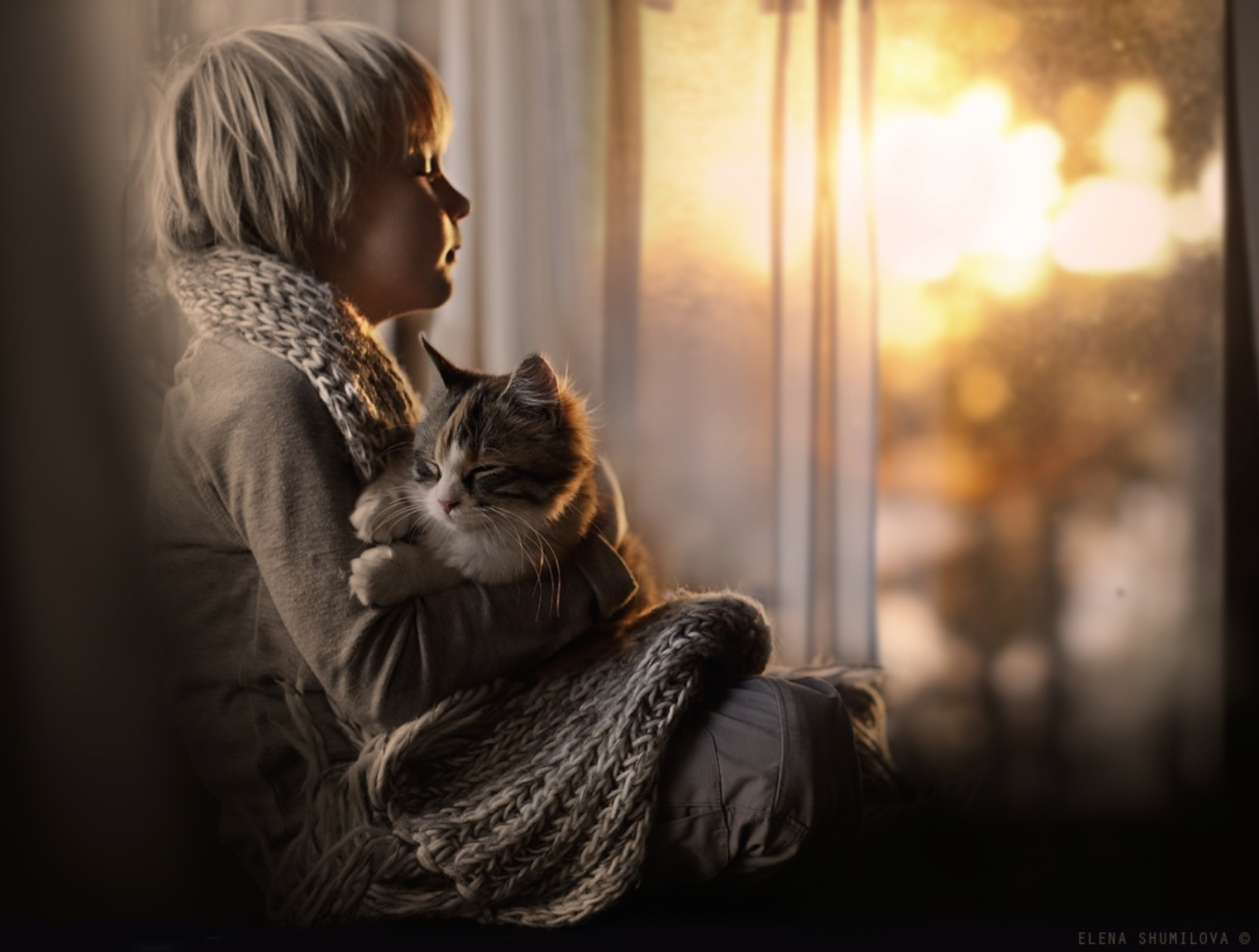 elena-shumilova-cat-photography-1