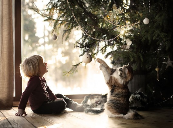 elena-shumilova-cat-photography-10