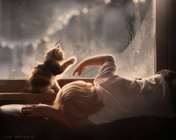 elena-shumilova-cat-photography-2