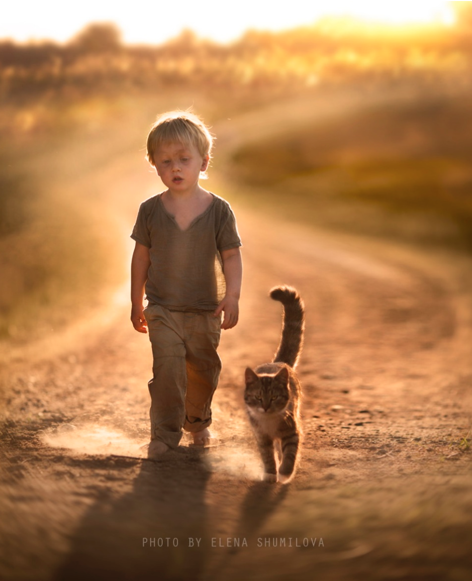 elena-shumilova-cat-photography-5