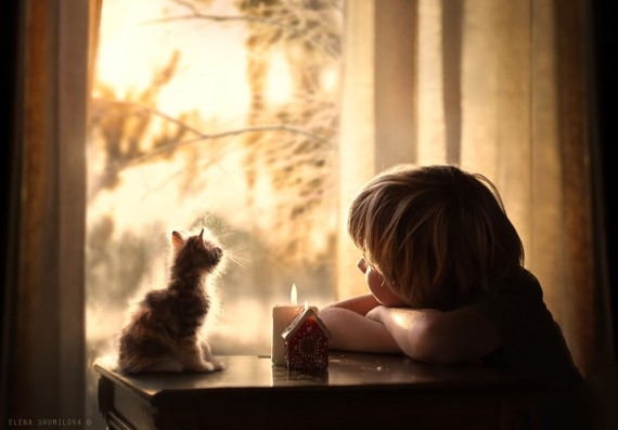 elena-shumilova-cat-photography-9