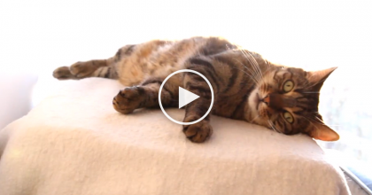 It's Time To Clean The Cat, So He Jumps Up, But I NEVER Expected What They Did Next – Oh My!