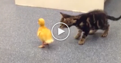 These Kittens Learn Things For The First Time And It's Just Adorable… Must WATCH!