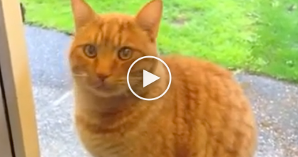 Watch What This Cat Does When He Wants To Come Inside… When You See It… Unbelievable?!