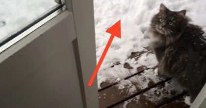 When There's Snow Outside, This Cat Has Something Exciting To Show Us. *Hint: It's AWESOME!