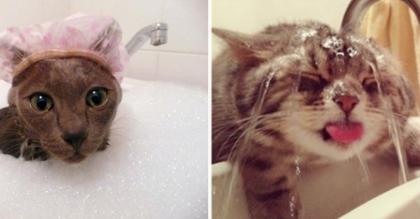 When You See What These 15 Cats Are Up To, You'll Be Cracking Up… How Can They Do This?!