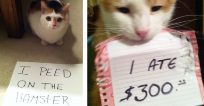 19 Pictures Of Cats Confessing To Their Hilarious Crimes… Oh Dear, I CAN'T Even Imagine #13