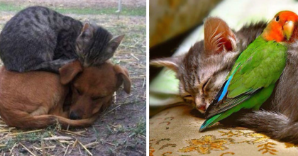 21 Images That Prove Cats Are The Best Snuggle Buddies In The World…Just Wait Till You See #9