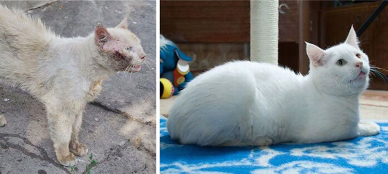 Before-and-after-cat-rescue-pictures-15