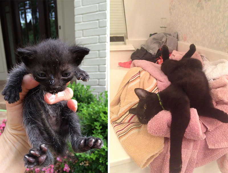 Before-and-after-cat-rescue-pictures-16
