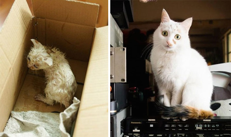 Before-and-after-cat-rescue-pictures-3