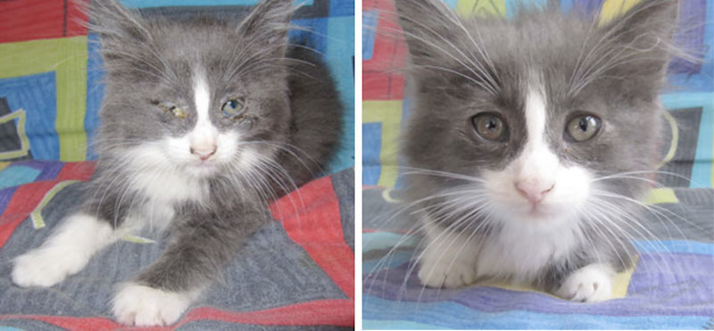Before-and-after-cat-rescue-pictures-6