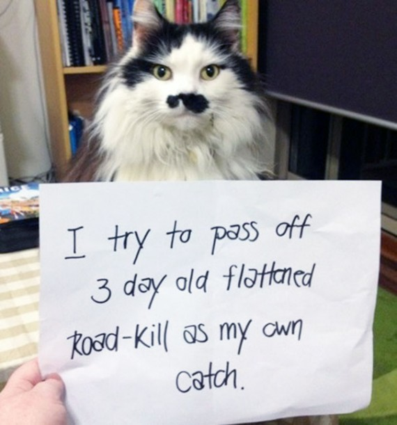 Pictures-Of-Cats-Confessing-To-Crimes-14