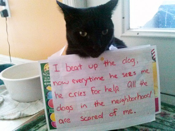 Pictures-Of-Cats-Confessing-To-Crimes-4