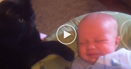 This Baby Was Crying, But They NEVER Expected Their Cat Would Do THIS! Unbelievable…