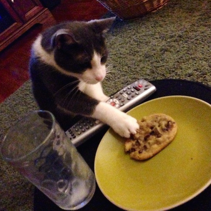 cat-stealing-stuff-theives-6