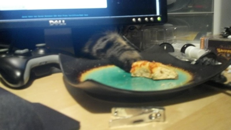 cat-stealing-stuff-theives-8
