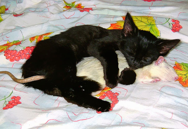 cats-are-the-best-snugglers-in-the-world-1