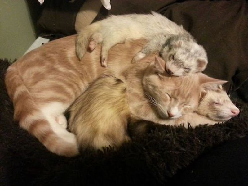 cats-are-the-best-snugglers-in-the-world-10