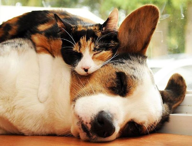 cats-are-the-best-snugglers-in-the-world-13