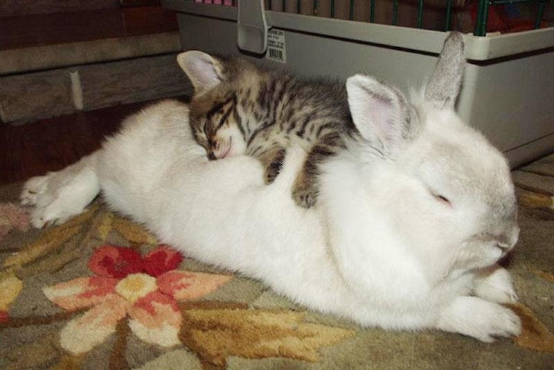 cats-are-the-best-snugglers-in-the-world-14