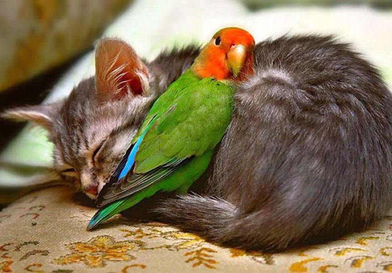 cats-are-the-best-snugglers-in-the-world-17
