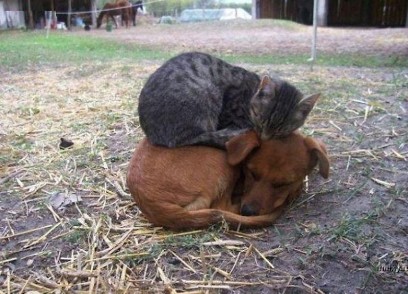 cats-are-the-best-snugglers-in-the-world-18