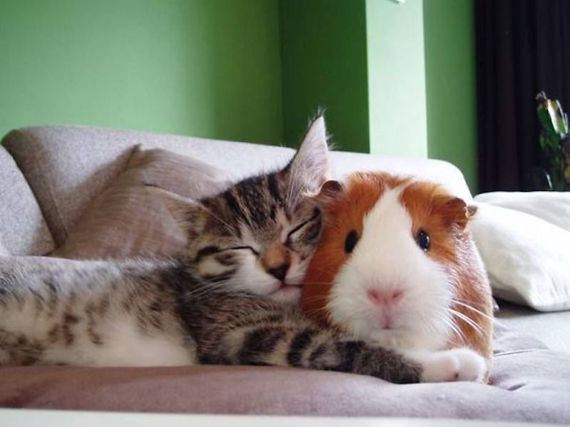 cats-are-the-best-snugglers-in-the-world-19
