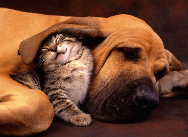 cats-are-the-best-snugglers-in-the-world-21