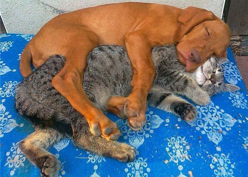 cats-are-the-best-snugglers-in-the-world-8