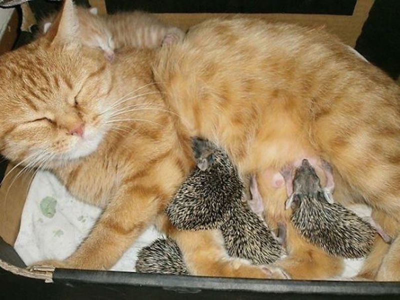 cats-are-the-best-snugglers-in-the-world-9