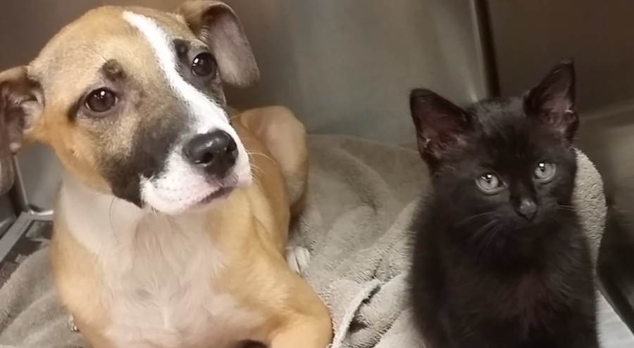 dog and cat adopted pets