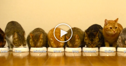 It's Time To Eat, So The Cats Come Running… Woah?! Now THIS Is One 'Big Happy Family' LOL