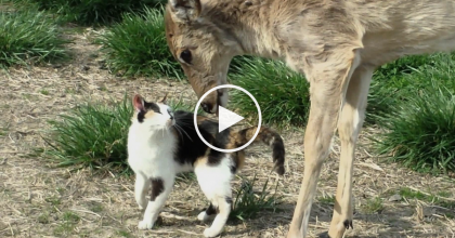Nobody Believed They'd Still Be Friends, So They Grabbed The Camera And Recored…  AMAZING