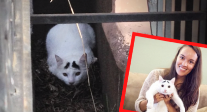 She Rescued An Abandoned Cat, But Then One Morning She Woke Up To An Unbelievable Surprise!