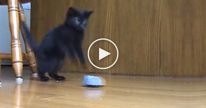 They Drove This Remote Control Mouse Around The House… What Happened Next Is AWESOME