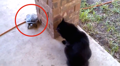 They Witnessed Something They've Never Seen Before When This Cat Noticed The Turtle…LOL