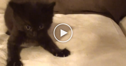 This Adorable Black Kitten Has A Message To Tell The World: 'Black Cats RULE' I Love It…