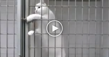 "Kitty Shows Off His ""Smarts"" By Using His Paw, Opening His Cage…You Don't See THIS Everyday!"