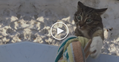 This Cat Wanted To Be Let Inside, But What His Owner Did Next? I CAN'T Believe It…