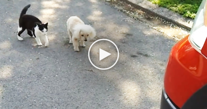 Doggie Is Blind, But Watch And See What THIS Cat Does Next… Amazing!!